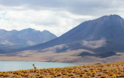 Mountains to the Sea: Ecosystems of Chile